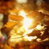 Bunte Blätter, Brunft & Co. – Herbst im Zentrum