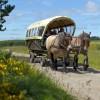 Im Kaltblut-Tempo durch den Nationalpark: Im April beginnt die Saison für Kutschfahrten über die Dreiborner Hochfläche