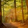 Frühjahrs-Treffen der touristischen Organisationen, Wegemanager und Betriebe am Eifelsteig und im NaturWanderPark delux