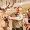 """Nationalpark-Zentrum Eifel: Pünktlich zur Brunft dreht sich in der Ausstellung """"Wildnis(t)räume"""" alles um den Rothirsch"""