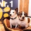Urlaub mit Hund: Startschuss zur neuen Pfoten-Klassifizierung