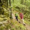 Neuer Wanderführer zum Wildnis-Trail im Nationalpark Eifel