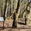 Auf historischer Erkundungstour im Naturpark Südeifel
